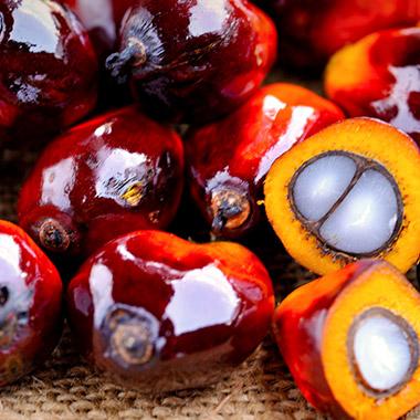 Alles rund ums Palmöl – und warum wir gerne darauf verzichten