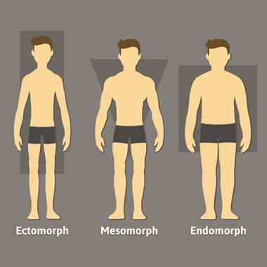 Körpertypen: Training & Ernährung für deinen Körperbau